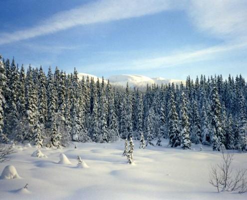 Vinter ved Stemmetjønn